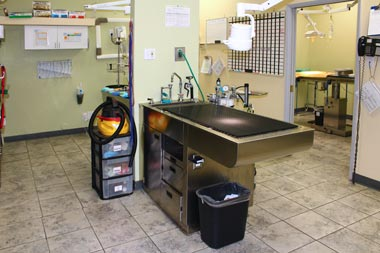 Pet Treatment Room