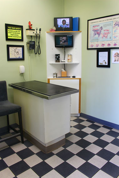 Veterinarian Examination Room